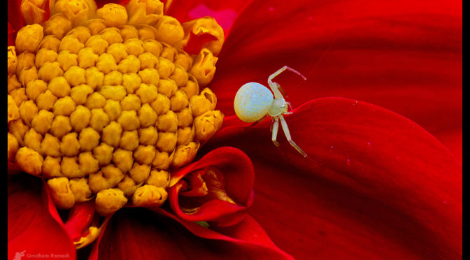 Macro Photography by Goutham Ramesh