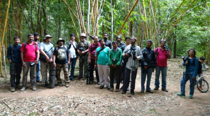 Macro Fever at Arakere Forest