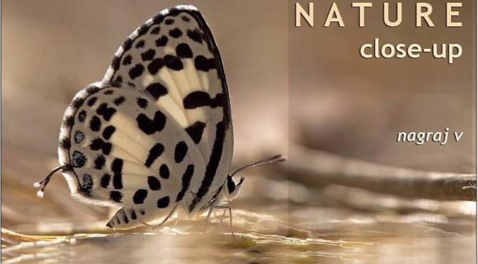 NATURE close-up by V Nagaraj
