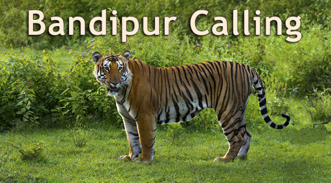 Bandipur Calling – Wildlife Workshop