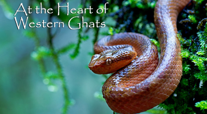 At the Heart of Western Ghats