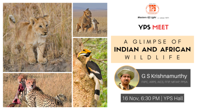 A Glimpse of Indian and African Wildlife
