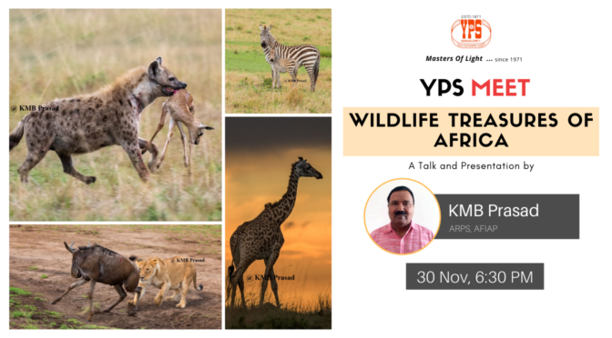 YPS Meet - Wildlife Treasures of Africa