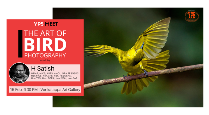 YPS Meet - The Art of Bird Photography 15 Feb VAG