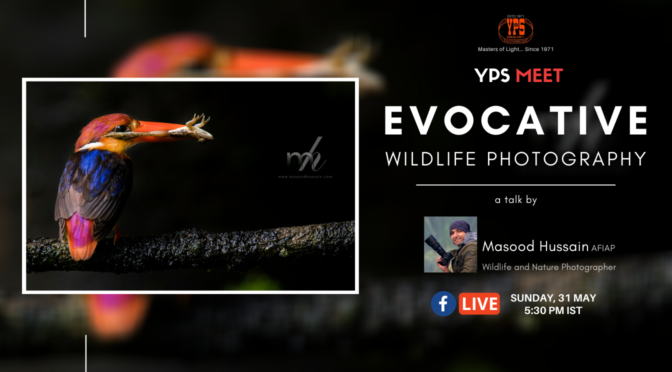 YPS Meet - Evocative Wildlife Photography - 31 May @ 5.30pm IST
