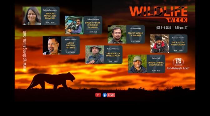 YPS WILDLIFE WEEK 2020