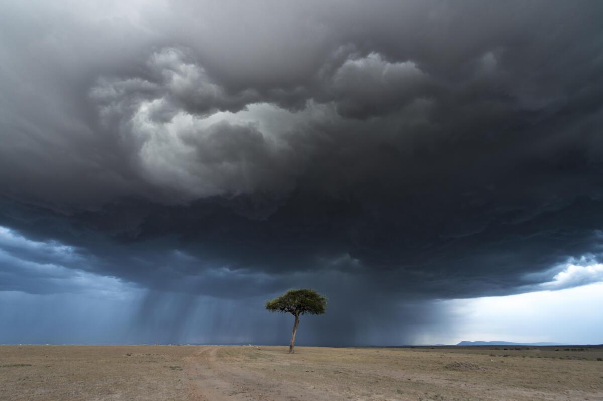 The lone tree...