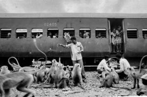 Monkeys regularly harrass passengers at Goram Ghat station but they've been emboldened by passengers who are very eager to feed them