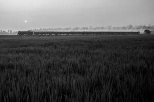 The morning service to Mailani departs Nanpara Junction in Uttar Pradesh and races past the wjeat fields shortly after sunrise