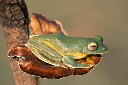 48 - Frog