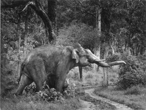 20 - Tusker on Rampage