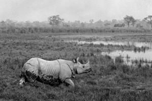 21 - Rhino