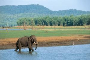 32 - Tusker in Water