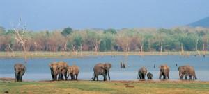 36 - Family of Elephants