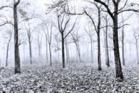 nagarahole-in-mist