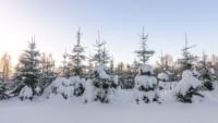 arctic-winter