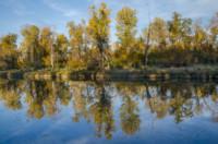 reflection-4