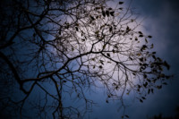 silhouette-of-a-tree-in-winter
