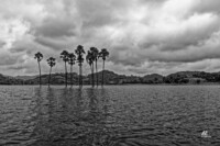 palm-trees-in-water
